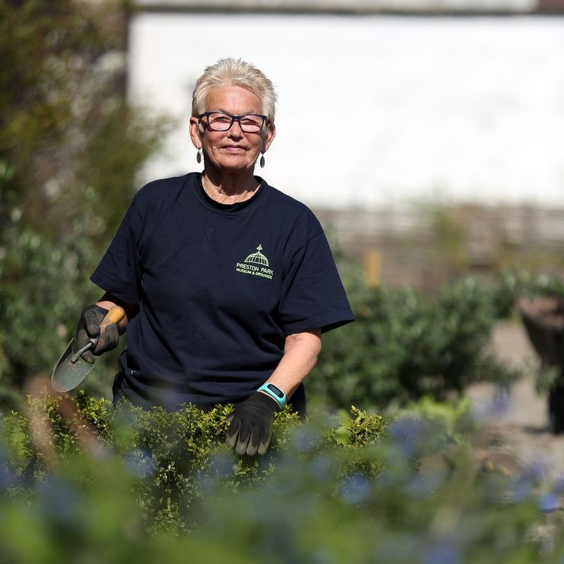 A Volunteer Working In The Borders Of The Walled Garden