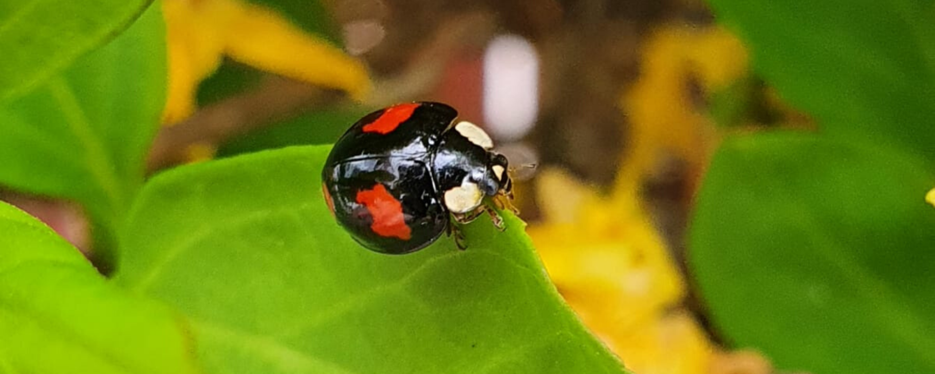 Image of a ladybird